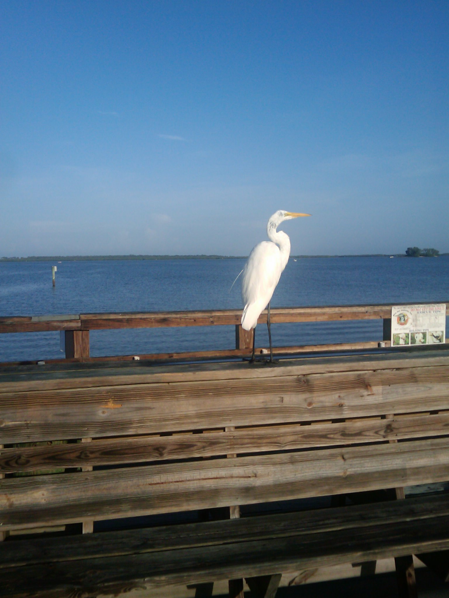 Are you not my heron, my mist, my morning tea?
